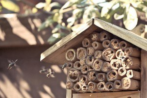 bee house (c) poppet with a camera on flikr